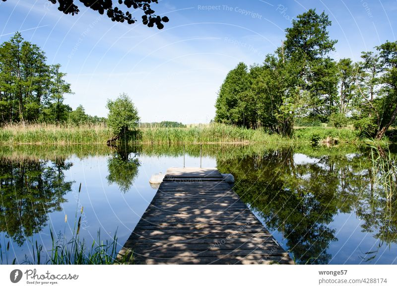 Ufer der Warnow mit hölzernen Bootssteg und Lichtschattenmuster, sowie sich im Wasser spiegelnden Bäumen, Schilf und blauem Sommerhimmel Fluss Steg Uferpflanzen