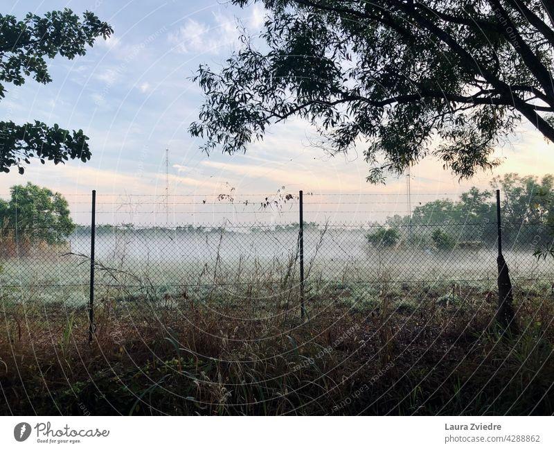 Morgennebel Nebel neblig Sonnenlicht Landschaft Baum Natur im Freien Saison Morgenlicht Ansicht Umwelt grün schön Licht natürlich malerisch Zaun Hintergrund