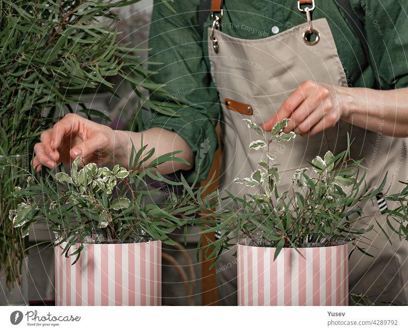 Anmutige weibliche Hände der Floristin machen Geschenksträuße in Hutschachteln. Florist Arbeitsplatz. Kleines Geschäftskonzept. Frontansicht. Blumen und Zubehör