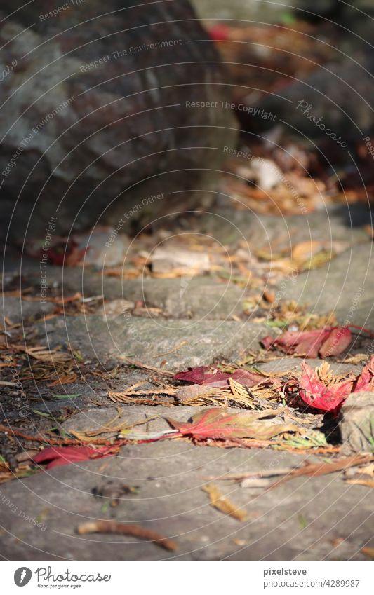 Laub auf einem Steinboden an einem sonnigen Herbstabend Boden Blatt Herbstlaub braun braune Blätter Weg Nahaufnahme Herbstfärbung Waldboden Natur herbstlich