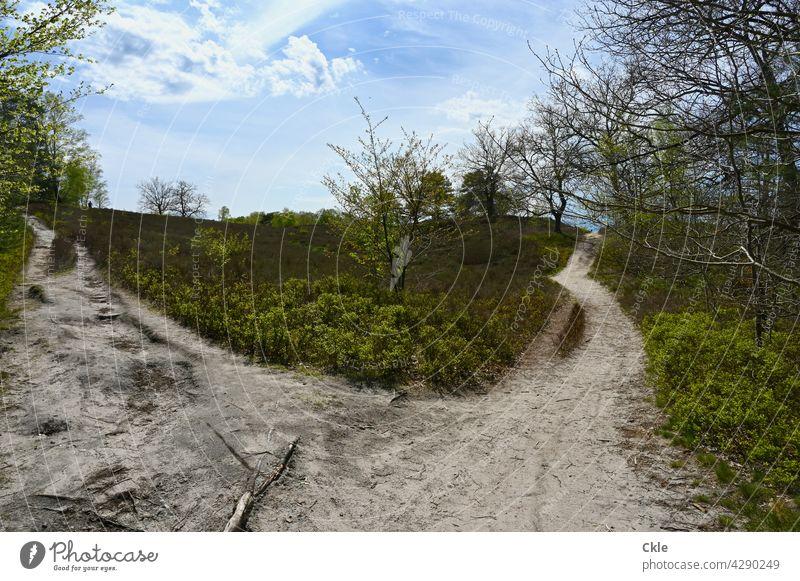 Harburger Hoch-Heide Wege Pfade Gabelung Bäume Wanderwege Wege & Pfade Natur Landschaft wandern Baum Umwelt Fußweg Spaziergang ruhig Neugraben-Fischbek