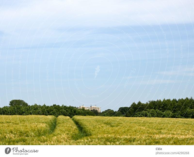 Blick übers Weizenfeld auf Bad Oldesloer Hochhaus Getreide Landwirtschaft Kornfeld Nutzpflanze Getreidefeld Ackerbau Natur Ähren Ernährung Ernte Ackerfurche