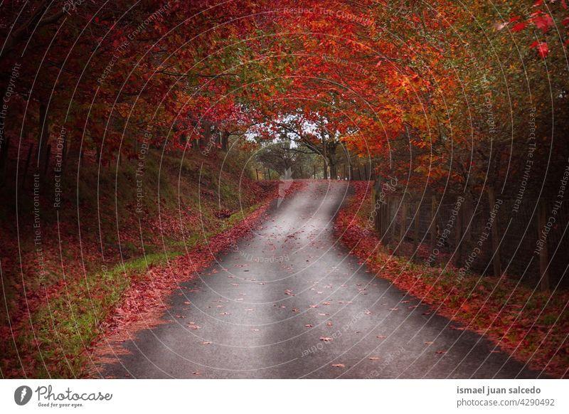 Straße mit brauner und roter Vegetation in der Herbstzeit Weg Wald Bäume gelb Blätter Niederlassungen Berge u. Gebirge Laufsteg hölzern Ländliche Szene Laubwerk
