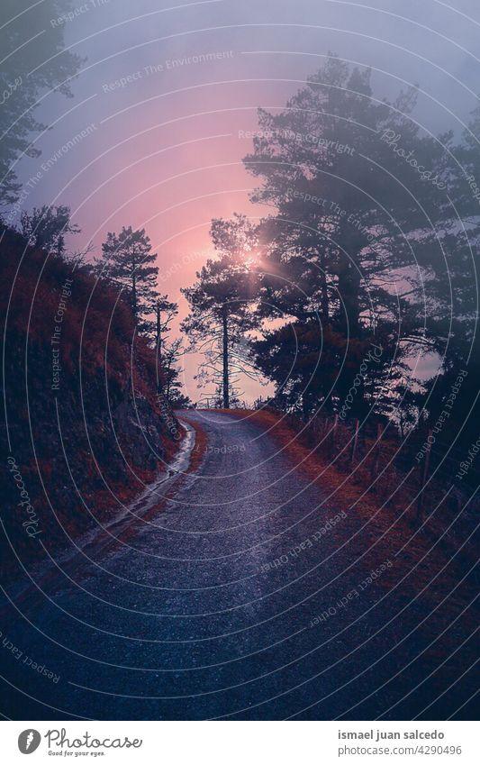 Straße mit roter Vegetation in nebligen Tagen im Herbst Saison Weg Wald Bäume braun Blätter Niederlassungen Berge u. Gebirge Laufsteg hölzern Ländliche Szene