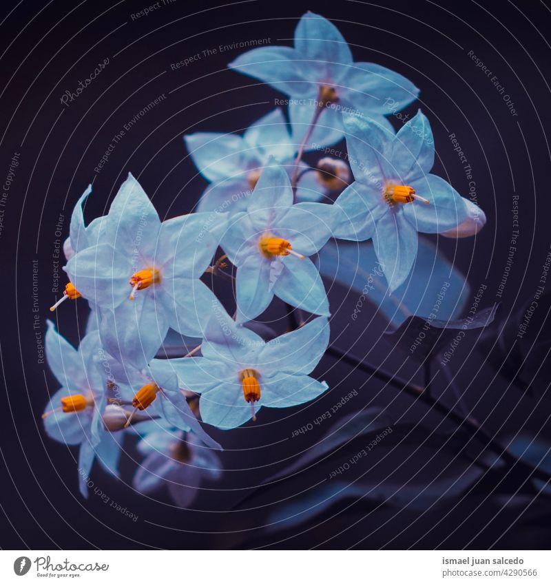 romantische weiße Blumen im Garten im Frühling Blütenblätter Pflanze geblümt Flora Natur natürlich dekorativ Dekoration & Verzierung Schönheit Zerbrechlichkeit