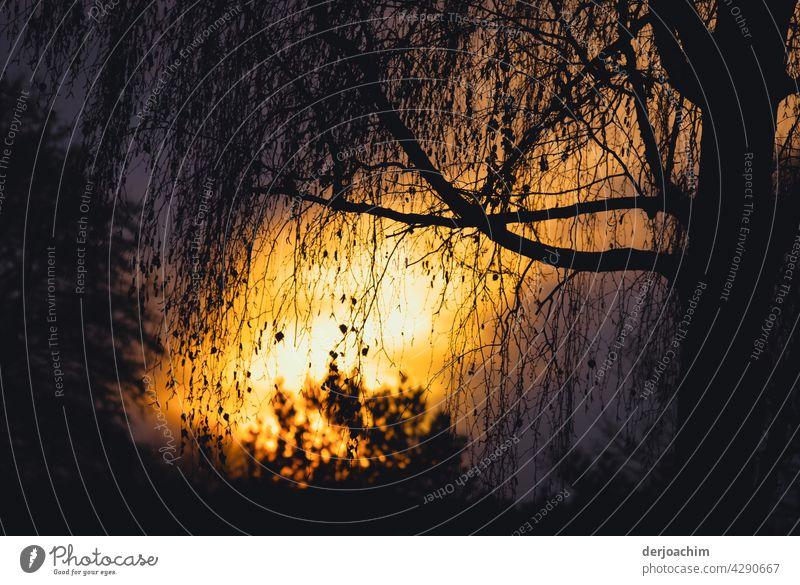 Die untergehende Abendsonne spiegelt sich am Weiher zwischen einem Baum und Busch. Sonnenuntergang Natur Außenaufnahme Silhouette Farbfoto Wasser Abenddämmerung