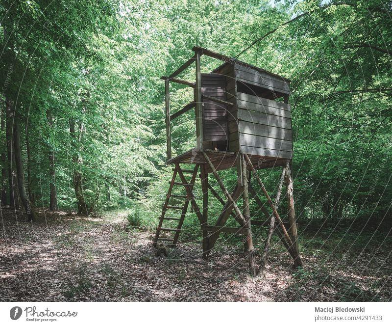Hölzerne Hirschjagdblende im Wald, farbig getönt. Jagd blind Turm stehen Tierhaut Hirsche Kanzel Natur Wildnis Holz im Freien Baum retro gefiltert Hochsitz