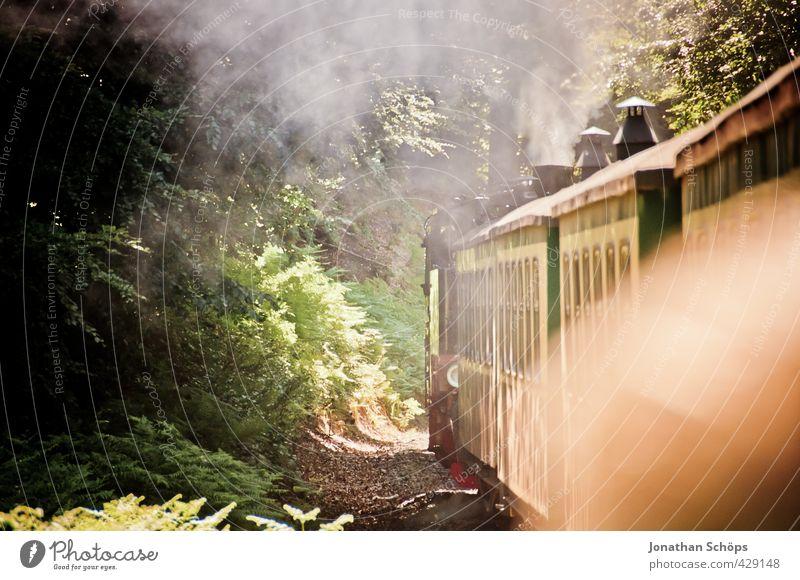 Rasender Roland Ferien & Urlaub & Reisen alt grün Sonne Wald Umwelt Reisefotografie Idylle Verkehr Eisenbahn historisch Rauch Schornstein verträumt Rügen
