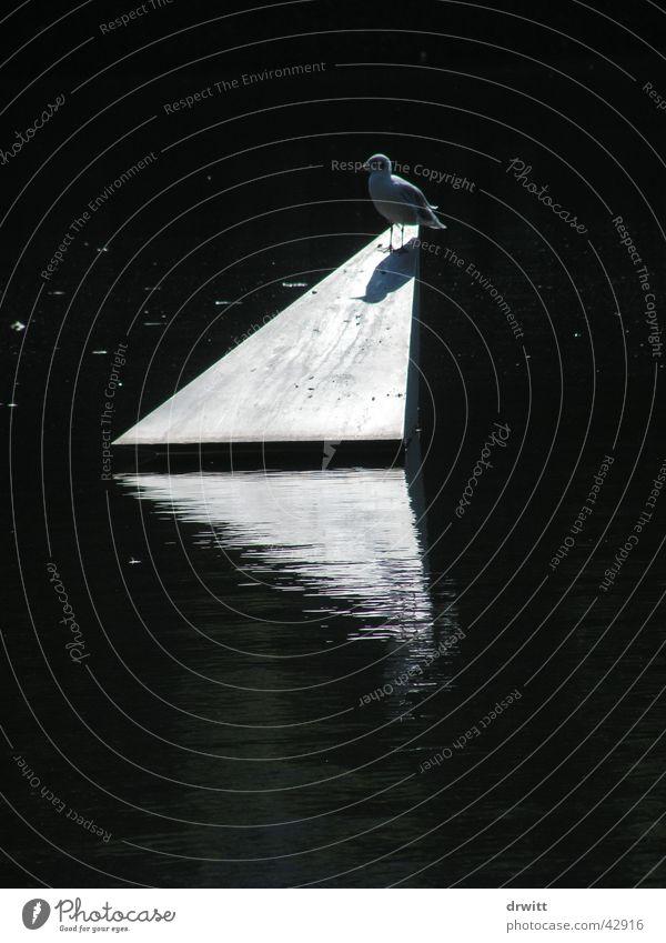 Taube Dreieck Gegenlicht Reflexion & Spiegelung Vogel Park Verkehr Pyramide Wasser