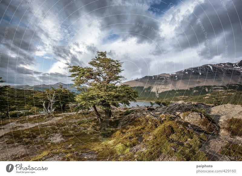 von Wolken umrahmter Baum Abenteuer Argentinien ruhig Chile Farbe mehrfarbig Wald wandern Mond Mondaufgang Berge u. Gebirge Nacht Patagonien unverdorben rein