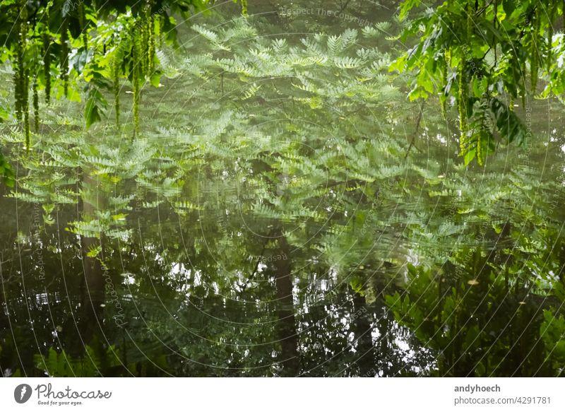 Bäume spiegeln sich in einer glatten Wasseroberfläche abstrakt Hintergrund schön Schönheit hell Windstille Konzept Textfreiraum Umwelt Wald gerahmt frisch grün