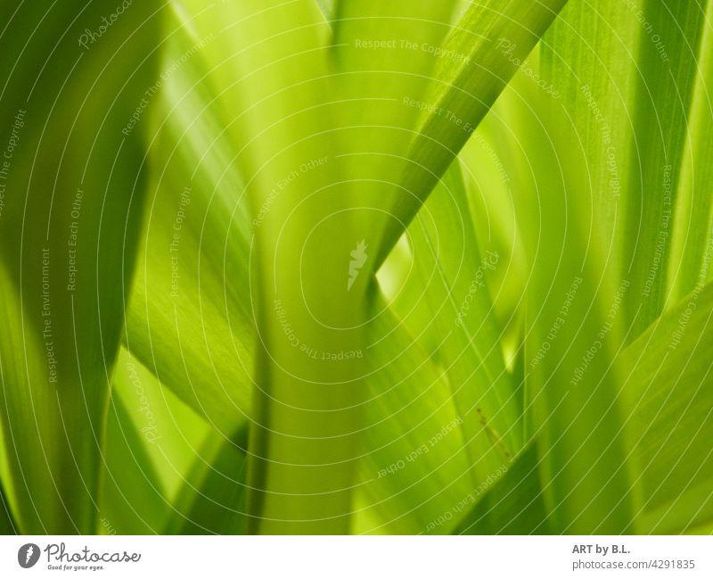 fast wie gemalt... Blatt Blätter Fotokunst Grün grünes zartgrün übereinander untereinander Natur pflanze hintergrund