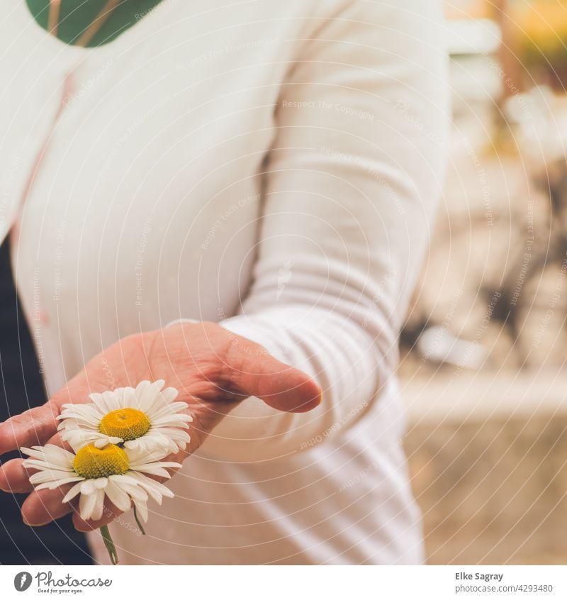 Blumenköpfe  in der  Damen Hand hand Finger blumen Frau feminin Farbfoto Außenaufnahme Romantik Blüte Natur Blühend