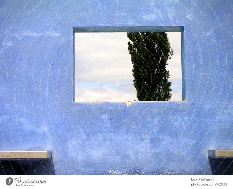 blaue Wand Baum Fenster Mauer Kunst Architektur modern Ausstellung Hannover Kunstwerk Betonwand Weltausstellung