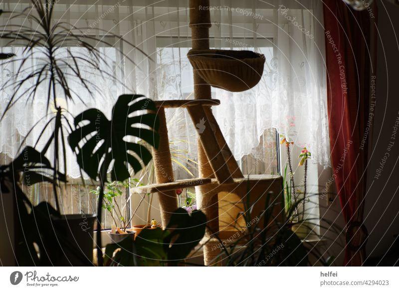 Katzenkratzbaum mit grünen Zimmerpflanzen vor hellem Fenster Monstera Blatt Monstera adansonii Botanik Topfpflanze Gegenlicht Innenaufnahme Kratzbaum Design
