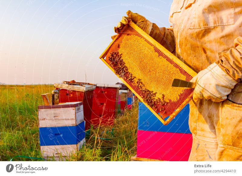Imker, Imkerin hält versiegelte volle Wabe mit Honig Ackerbau Zuteilung Bienenkorb Bienenzucht angeordnet Bienenstock Bienenwachs Verschlussdeckel Zellen