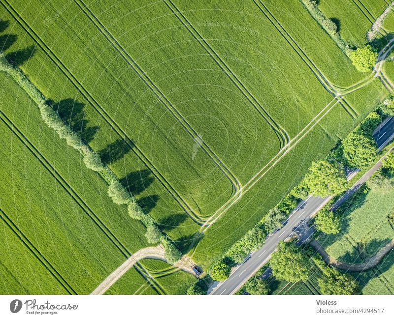 Spuren im Feld feld bäume Strukturen von oben ernte Landwirtschaft Agrar Landstraße vogelperspektive Nutzpflanze getreide ernten luftaufnahme grün natur