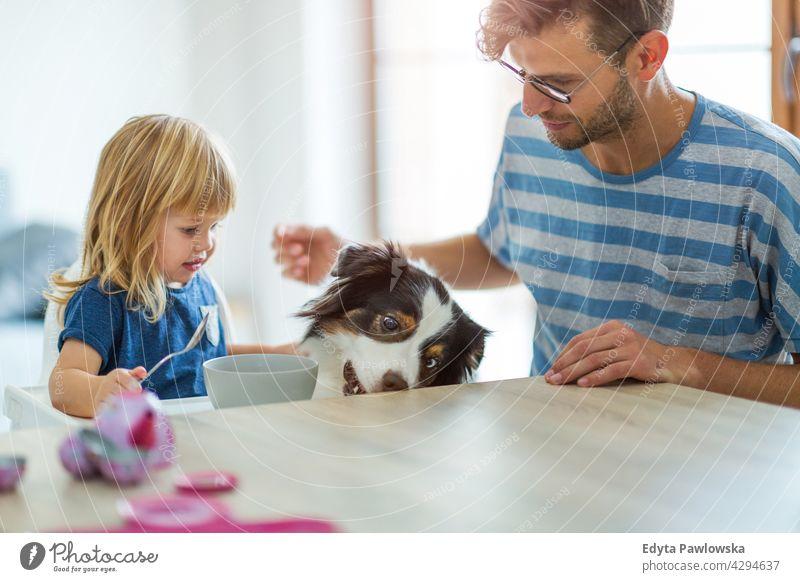 Alltag zu Hause mit Hund heimwärts Mann Papa Vater Familie Eltern Verwandte Kind Tochter Mädchen kleines Mädchen Kinder Partnerschaft Zusammensein