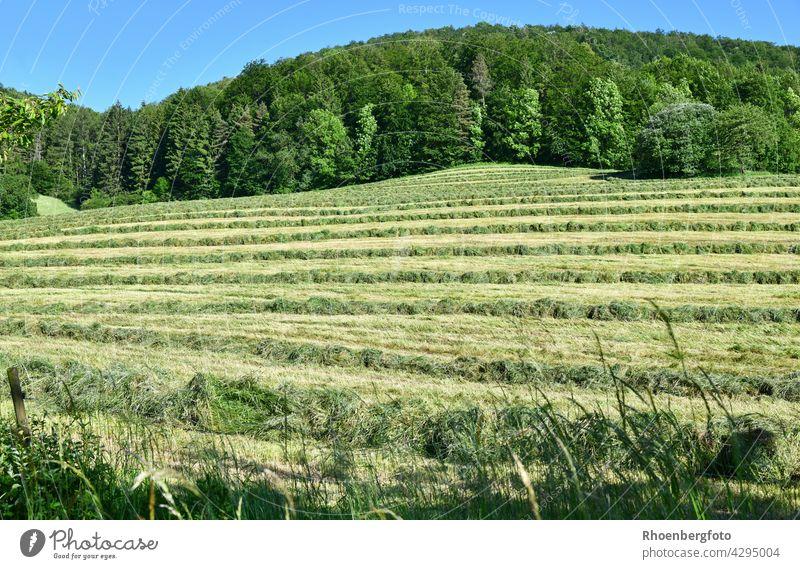 frisch gemähtes Gras auf einem Hang heu ernte heuernte gras gräser sommer warm hitze temperatur trocknen wiese weide blumen rhön feld landwirtschaft tierfutter