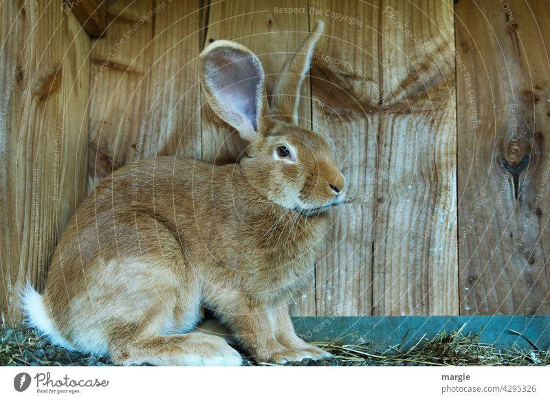 Hase im Stall Hase & Kaninchen Ostern Tier Totale Zentralperspektive Menschenleer Nahaufnahme Außenaufnahme Gedeckte Farben Farbfoto Angsthase Streichelzoo