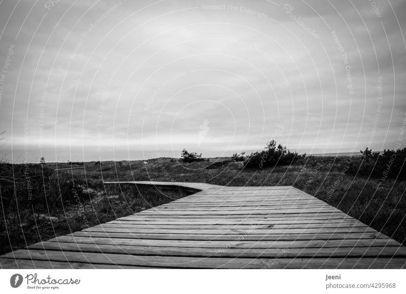Holzsteg durch das Gelände holzweg auf dem holzweg auf dem Holzweg sein Steg Wege & Pfade Düne Ostsee Darß Außenaufnahme Landschaft Himmel Wolken Natur