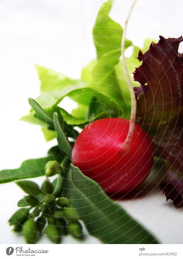 so´n salat grün rot Gesundheit Gemüse Wellness violett genießen Vitamin Salat knackig Radieschen Lollo rosso