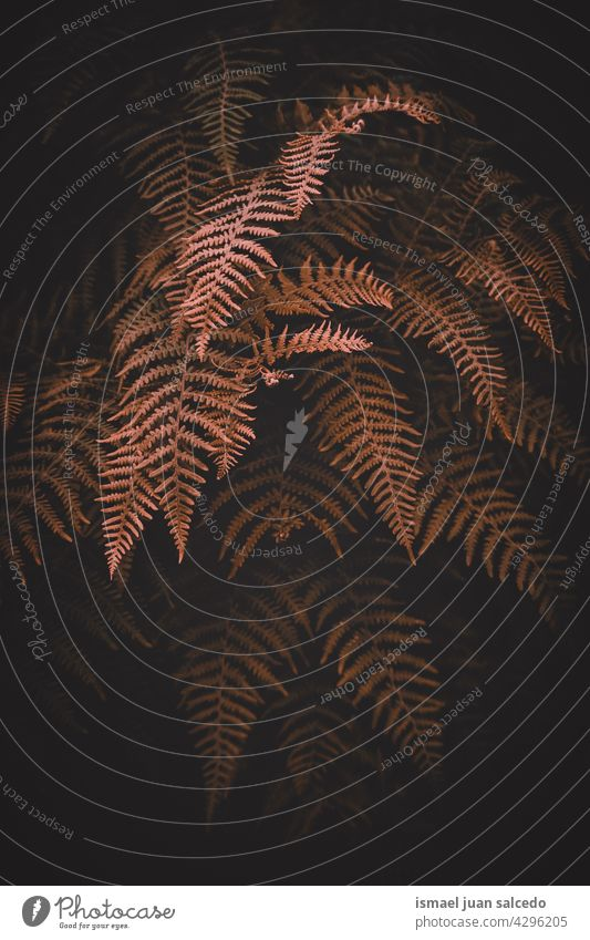 braunen Farn Blätter in der Natur im Herbst Saison Wurmfarn Pflanze Blatt abstrakt Textur texturiert Garten geblümt dekorativ im Freien Zerbrechlichkeit