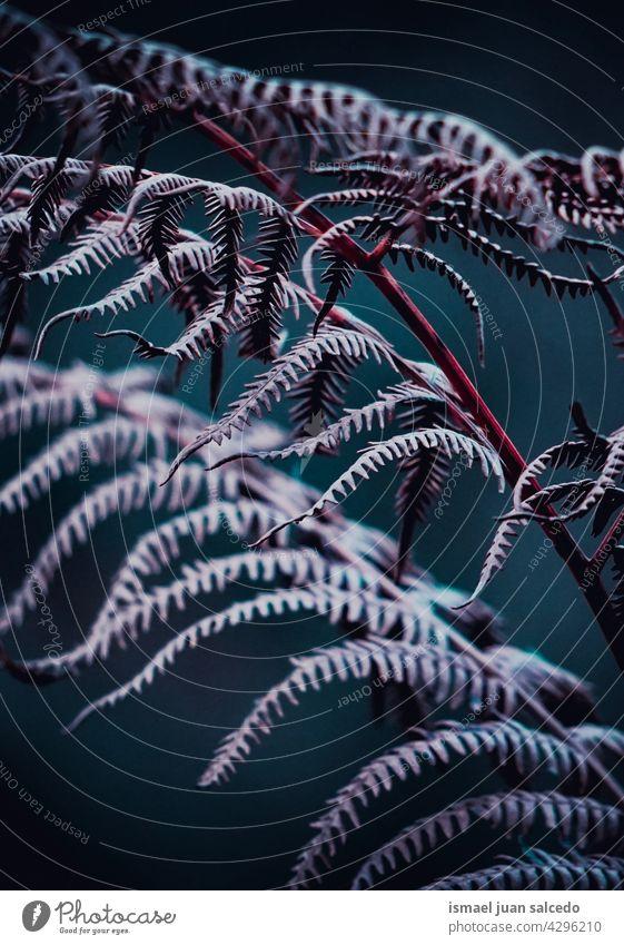 lila und rosa Farn Blätter im Herbst Saison Wurmfarn Pflanze Blatt abstrakt Textur texturiert Garten geblümt Natur dekorativ im Freien Zerbrechlichkeit