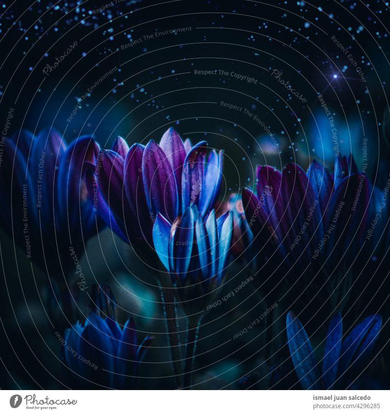 romantisch blau lila Blumen im Garten im Frühjahr Saison purpur Blütenblätter Pflanze geblümt Flora Natur natürlich dekorativ Dekoration & Verzierung Schönheit
