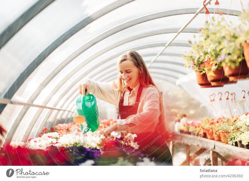 Professionelle Gärtnerin wächst Blumen in einem Gewächshaus. Tägliche Pflege der Pflanzen. Gartencenter, Blumenladen Wachstum Bewässerung Blumentopf