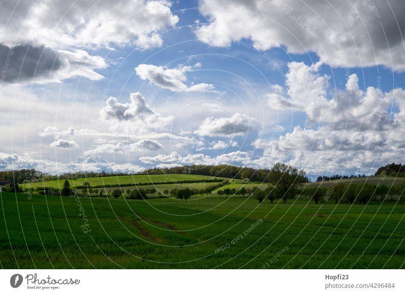Landschaft im Frühling Natur Nahaufnahme ländlich Feld Ackerboden acre Himmel Baum Außenaufnahme blau Menschenleer Tag Farbfoto Sonnenlicht Wetter Kontrast