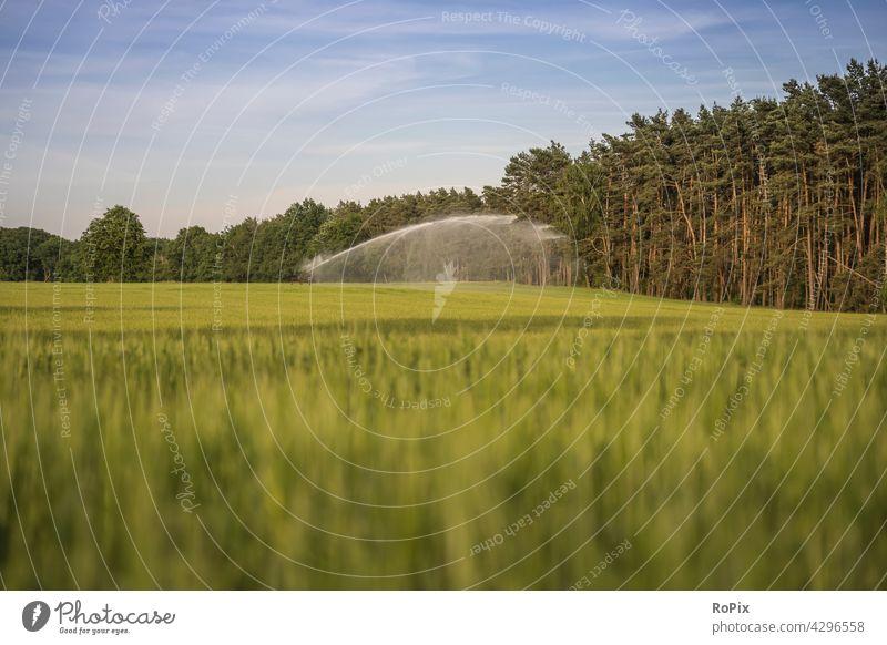 Bewässerungsanlage auf einem Kornfeld. natur kornfeld blume flower landwirtschaft papaver getreide gerste rye acker ackerbau feldblume blüte poppyseed cornfield