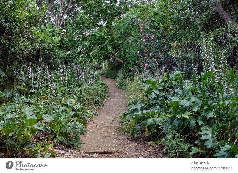 Fußweg mit Akanthuspflanze Blumen Weg Pflanze Bäume Nachlauf Abkürzung unten Natur Landschaft Frühling Schmutz Blatt mehrjährig Vegetation springtme