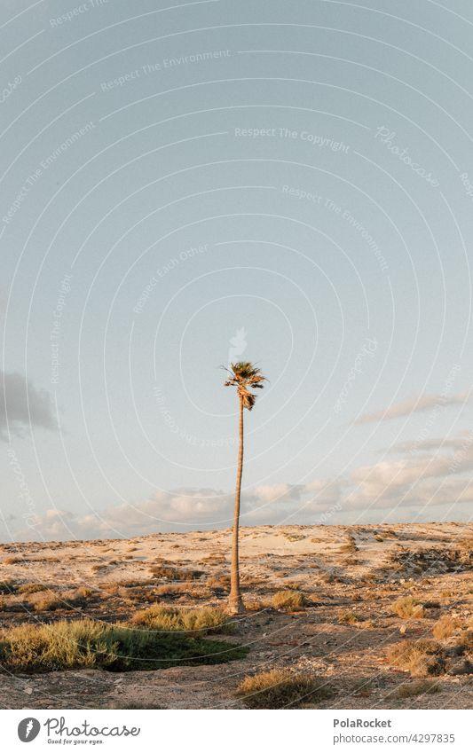 #A0# Auf die Palme Palmenwedel Palmenstrand Palmentapete Palmengarten Fuerteventura Kanaren Kanarische Inseln Sommer Idylle sommerstimmung