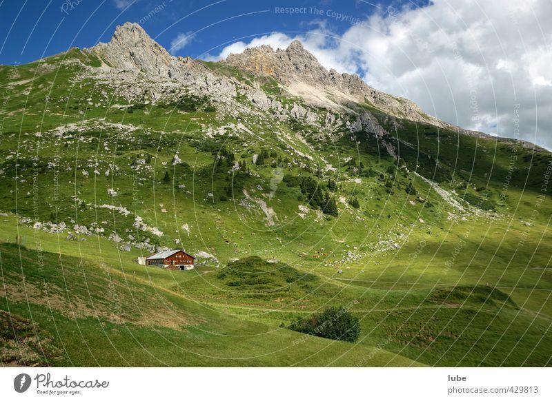 Hütte im Grünen Tourismus Sommer Berge u. Gebirge wandern Umwelt Natur Landschaft grün bregenzerwald Bundesland Vorarlberg alphütte alm Berghütte Felsen