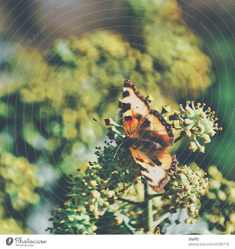 Kleiner Fuchs genießt Sonnenwärme Schmetterling Aglais urticae Tagfalter Edelfalter Nymphalis urticae Nesselfalter heimischer Schmetterling heimischer Falter