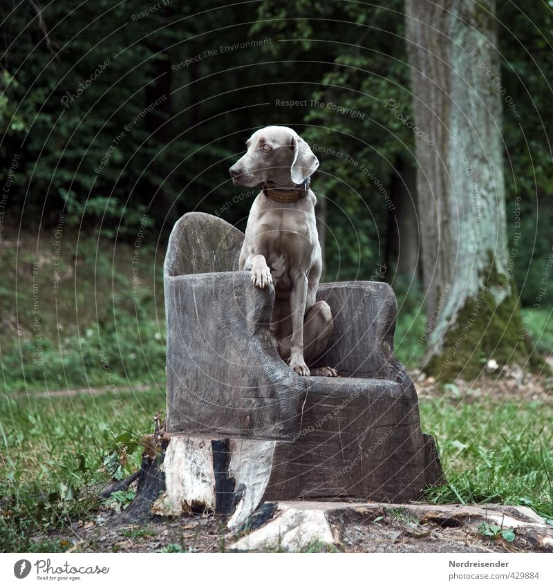 Man reiche mir mein Leckerli.... Baum Gras Wald Wege & Pfade Tier Hund beobachten Jagd sitzen ästhetisch Erfolg frech muskulös loyal achtsam Wachsamkeit