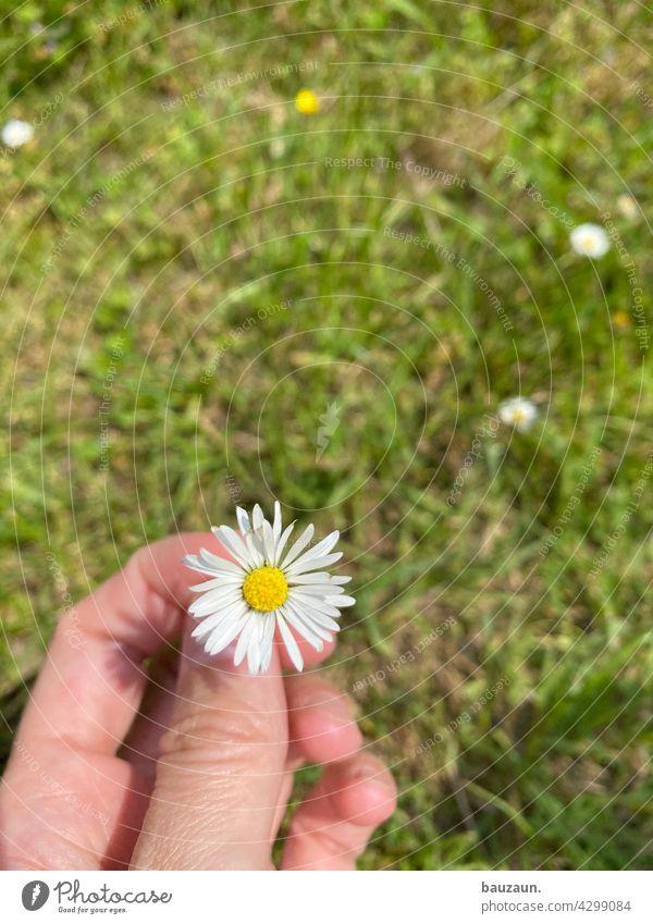 plümchen. Blume Natur Blüte Pflanze Nahaufnahme Farbfoto Außenaufnahme Detailaufnahme Garten Makroaufnahme Blühend Schwache Tiefenschärfe natürlich Frühling