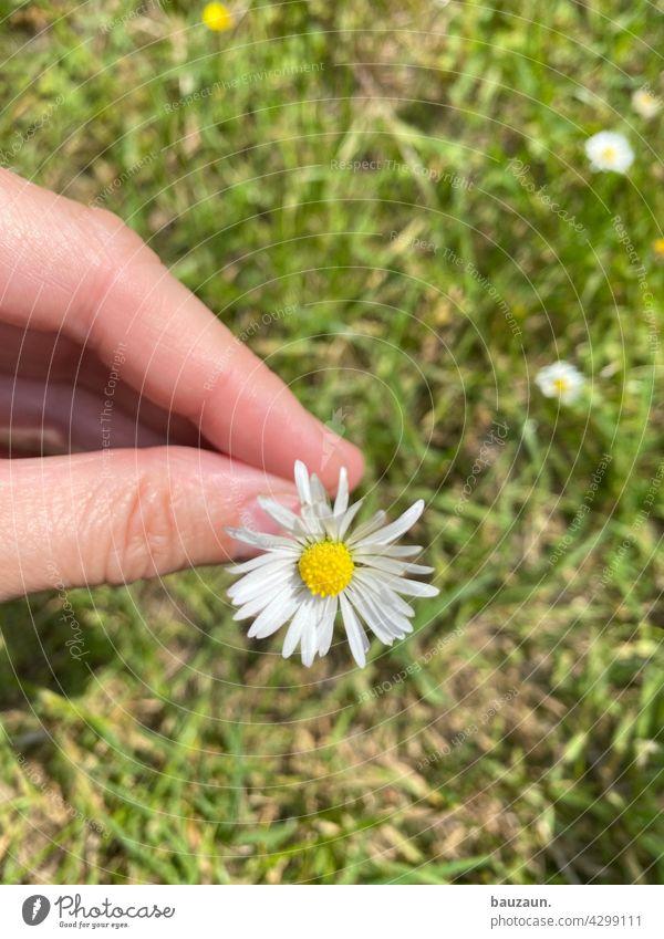 blümchen. Blume Natur Blüte Pflanze Nahaufnahme Farbfoto Außenaufnahme Detailaufnahme Garten Makroaufnahme Blühend Schwache Tiefenschärfe natürlich Frühling