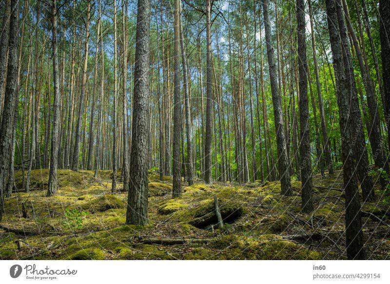 Wald Bäume Baum Moos Grün