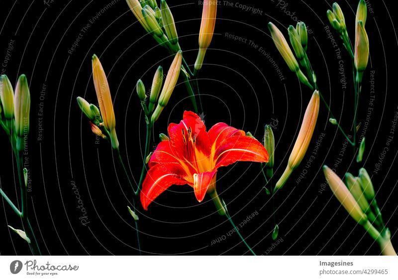 Creative Art Vintage Bouquet von Taglilie, Hemerocallis Blumen Pflanze. Blüten von natürlichen Lilienblüten in voller Blüte. Blumenhintergrund. Natürliche Dekoration Tapetentextur. Floristischer Hintergrund