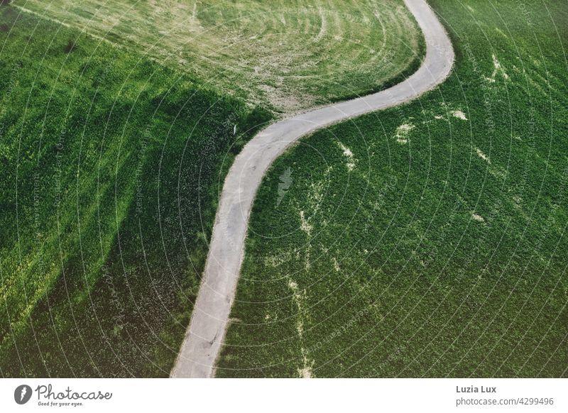 grün von oben... ein Wirtschaftsweg schlängelt sich zwischen Feldern Feldweg kurvig schlängeln winden Windungen Kurven Biegung Wiesen Spuren Grüntöne hellgrün