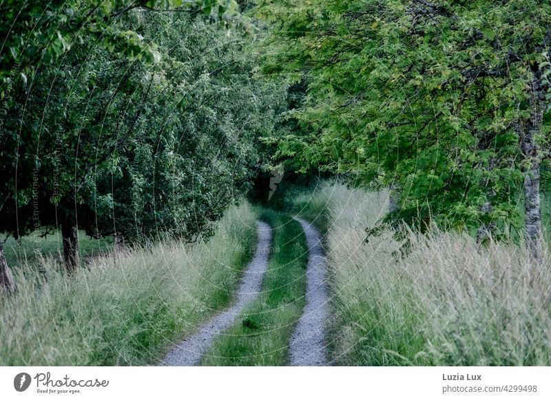 Ein Feldweg führt ins tiefe Grün Wirtschaftsweg Weg grün Wiese Bäume Sommer ländlich Gras dunkelgrün hellgrün Grüntöne Spuren Wiesen Felder Biegung Landschaft