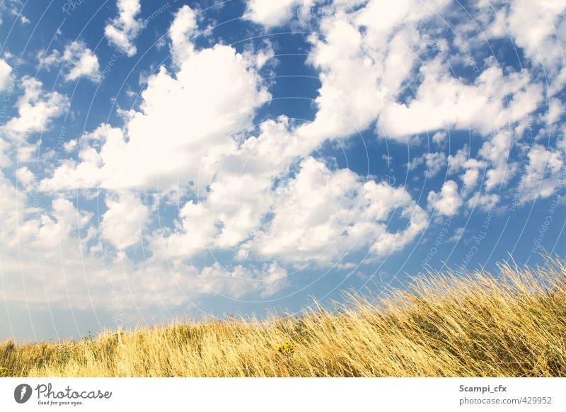 Sommerbrise Luft Himmel Wolken Horizont Sonne Sonnenlicht Schönes Wetter Wärme Gras Kornfeld Feld Brise lau Fröhlichkeit Unendlichkeit Freude Lebensfreude