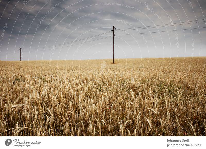 Kornfeld Himmel Natur Pflanze Landschaft Wolken gelb Umwelt Feld Erde Energiewirtschaft Landwirtschaft Netzwerk nachhaltig