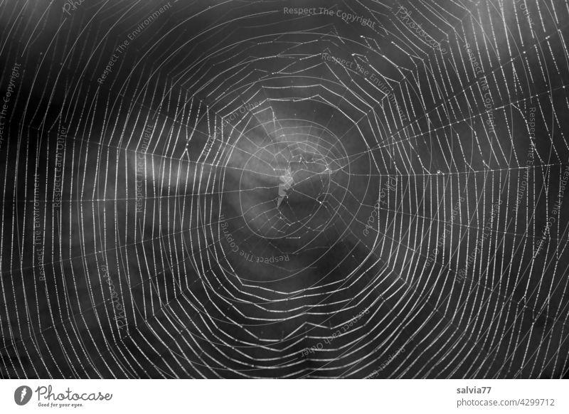 filigranes Kunstwerk, Spinnennetz im Gegenlicht Natur Nahaufnahme Schwarzweißfoto Radnetz Netz Gefahr Hintergrund neutral