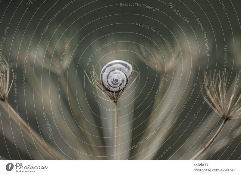 Geborgenheit Natur Schnecke Schneckenhaus Nahaufnahme Schutz Spirale Symmetrie Strukturen & Formen Zentralperspektive Muster Design Kontrast