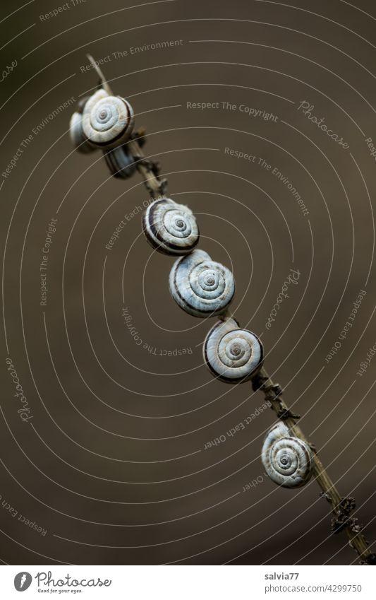 Sieben auf einen Streich Schnecke Natur Schneckenhaus Ruhe finden Makroaufnahme Spirale rund 7 Tier klein Schutz Strukturen & Formen Textfreiraum oben