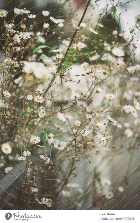Wilde Frühlingsblumen am Straßenrand Blüte Blume sommer garten natur aufblühen pflanze schönheit floral Wildblume lila weiß farbe zaun grün jahreszeit