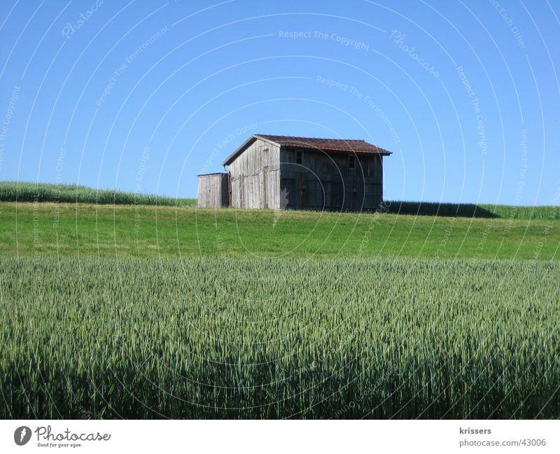 Ein Schuppen Scheune Feld blau Sommer Himmel Blauer Himmel ruhig einzeln Getreidefeld Menschenleer Lagerschuppen Feldrand